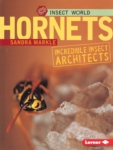 Hornets: Incredible Insect Architects (click for larger picture)